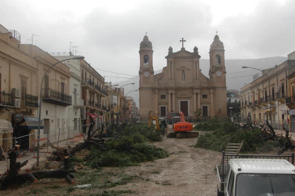 L'abbattimento dei ficus secolari per il rifacimento della piazza Duomo