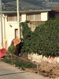 Il filare di Cipressi in via Mango