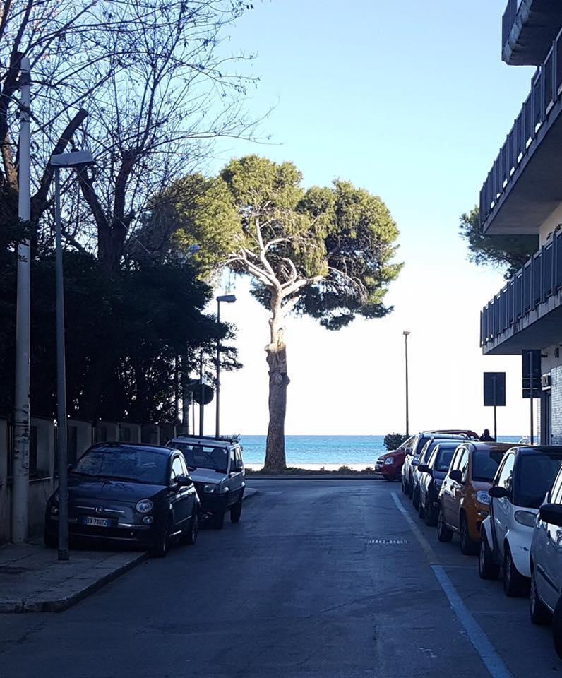 L'albero sul mare di Mondello a dicembre